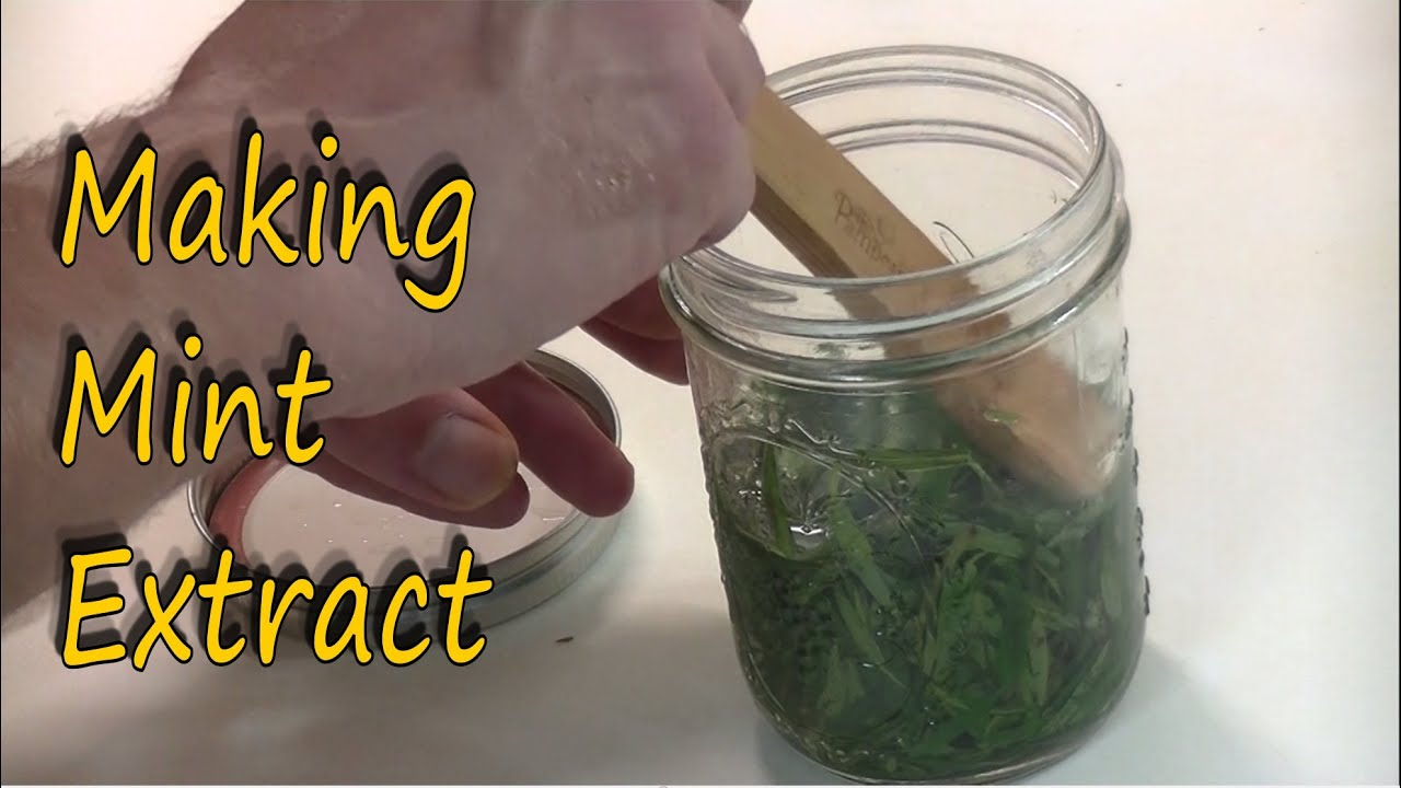Making Mint Extract From Wild Mint