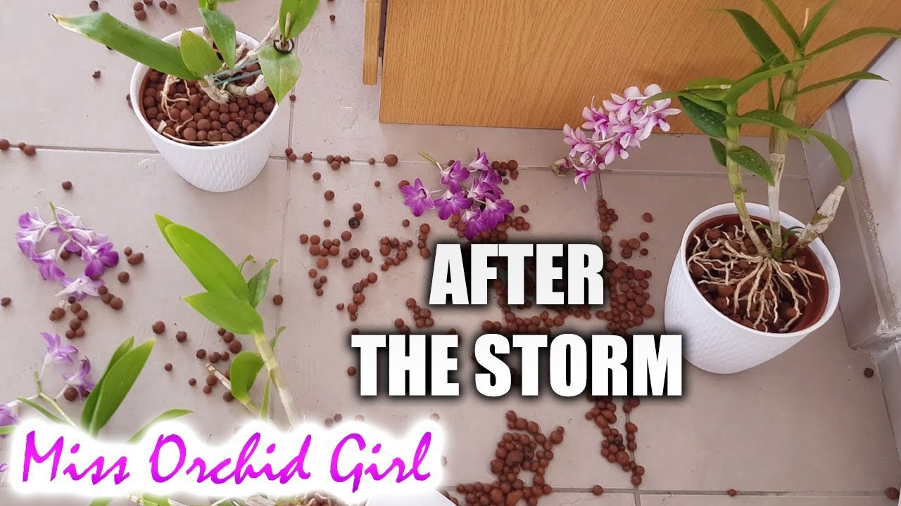 Orchids After The Storm