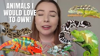 Animals That I Would LOVE To Own! | Pets I Want!