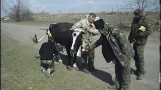 Корова беженка(для идиотов пропагандистов РАША ТВ не позорьтесь рассказывая что укры издеваются над животным. Если ничего..., 2015-04-03T08:54:58.000Z)