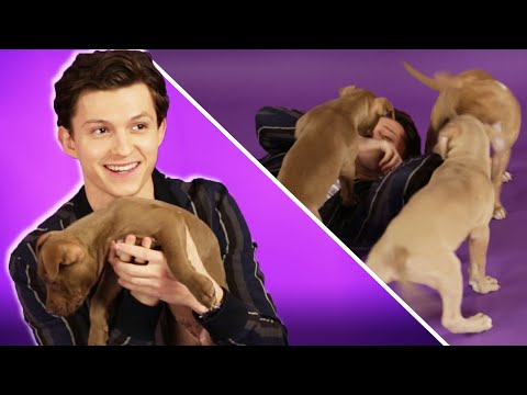 download Tom Holland Plays With Puppies While Answering Fan Questions