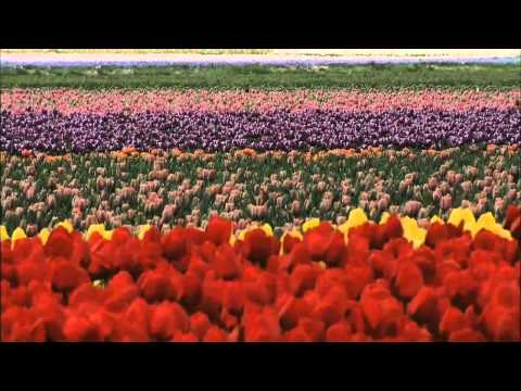 Wonderful Chill Out Music   Flowers