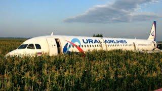 В самолет попала стая птиц. Лайнер сел на поле