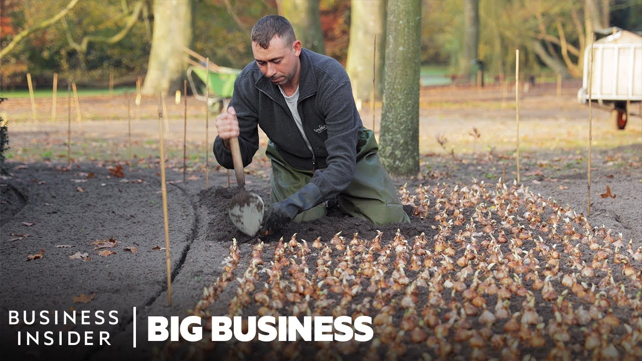 How 7 Million Flowers Are Planted At Keukenhof Every Year | Big Business