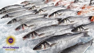 Warning!!!! Fish Is Not A Health Food Anymore