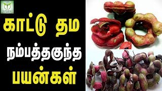 Unbelievable benefits of wild tamarind - Tamil Health & Beauty Tips