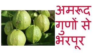 अमरूद गुणों से भरपूर benefits of guava