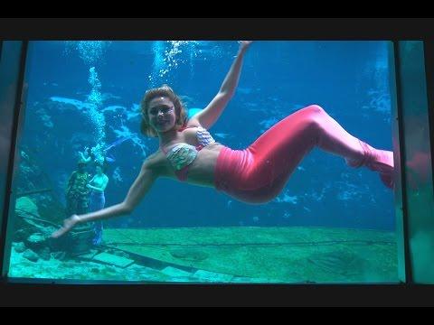WEEKI WACHEE MERMAIDS share secrets to working underwater - WildTravelsTV.com