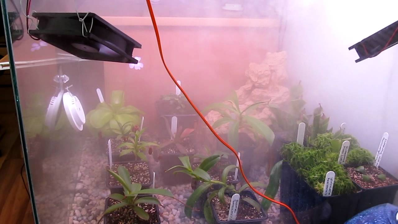 Terrarium Carnivorous Plants Youtube