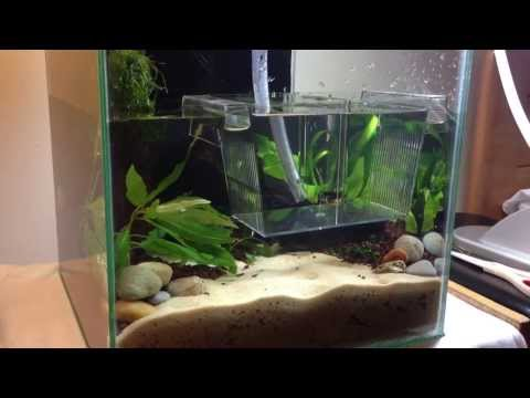 HOW TO: Making a Nano Red Cherry Shrimp Planted Aquarium | TonyTanks