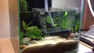 2. Making A Nano Red Cherry Shrimp Planted Aquarium
