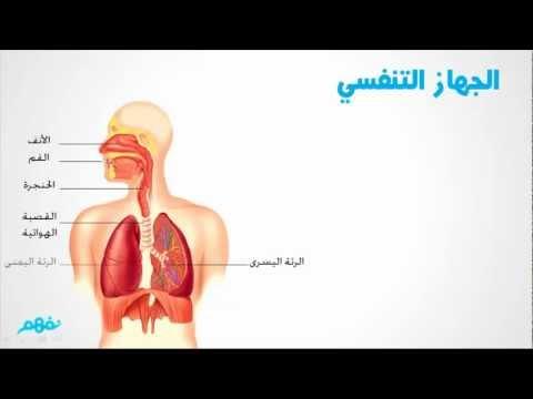 الجهاز التنفسي فى الإنسان - علوم للصف الرابع الإبتدائي - ج1
