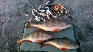 ПЕРВЫЙ ЛЕД 2020 Река Березина Рыбак провалился 09 02 20 Рыбалка на безмотылку и на червя Беларусь