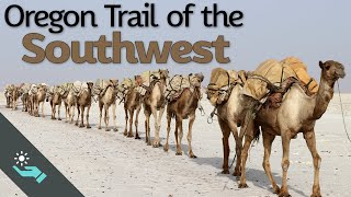 Scouting the Southwest   US Camel Corps