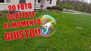 Video 20 FOTO SCATTATE AL MOMENTO GIUSTO!! download MP3, 3GP, MP4, WEBM, AVI, FLV Agustus 2017