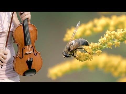 Die Biene (The Bee | L'Abeille) Franz Schubert - Duo Bella Musik