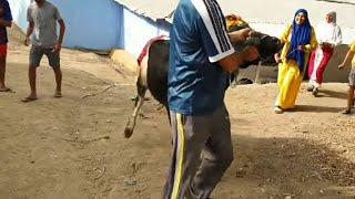 عرضنا على الناس الدوار ودبحنا البقرة باش نمشيو للحنة دالعروسة