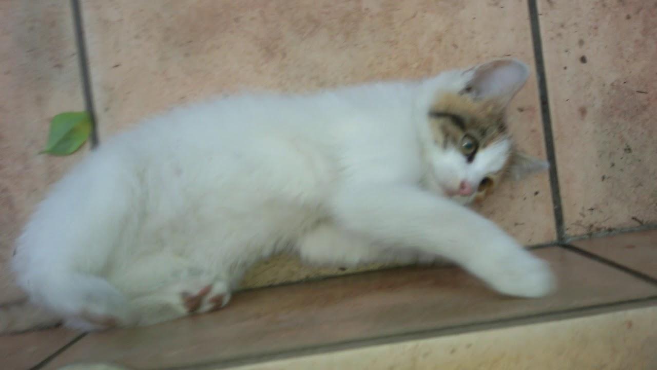 Świeże Oddam koty w dobre ręce od 20 października 2017 - YouTube YZ94