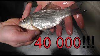 КАТАСТРОФА, 40 000 рублей за рыбалку на карася