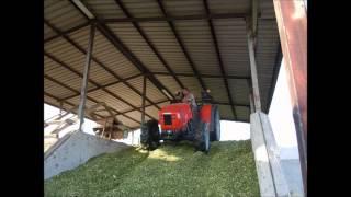 AZIENDA AGRICOLA DA ROS: FOTO VARIE E PESTAGGIO INSILATO