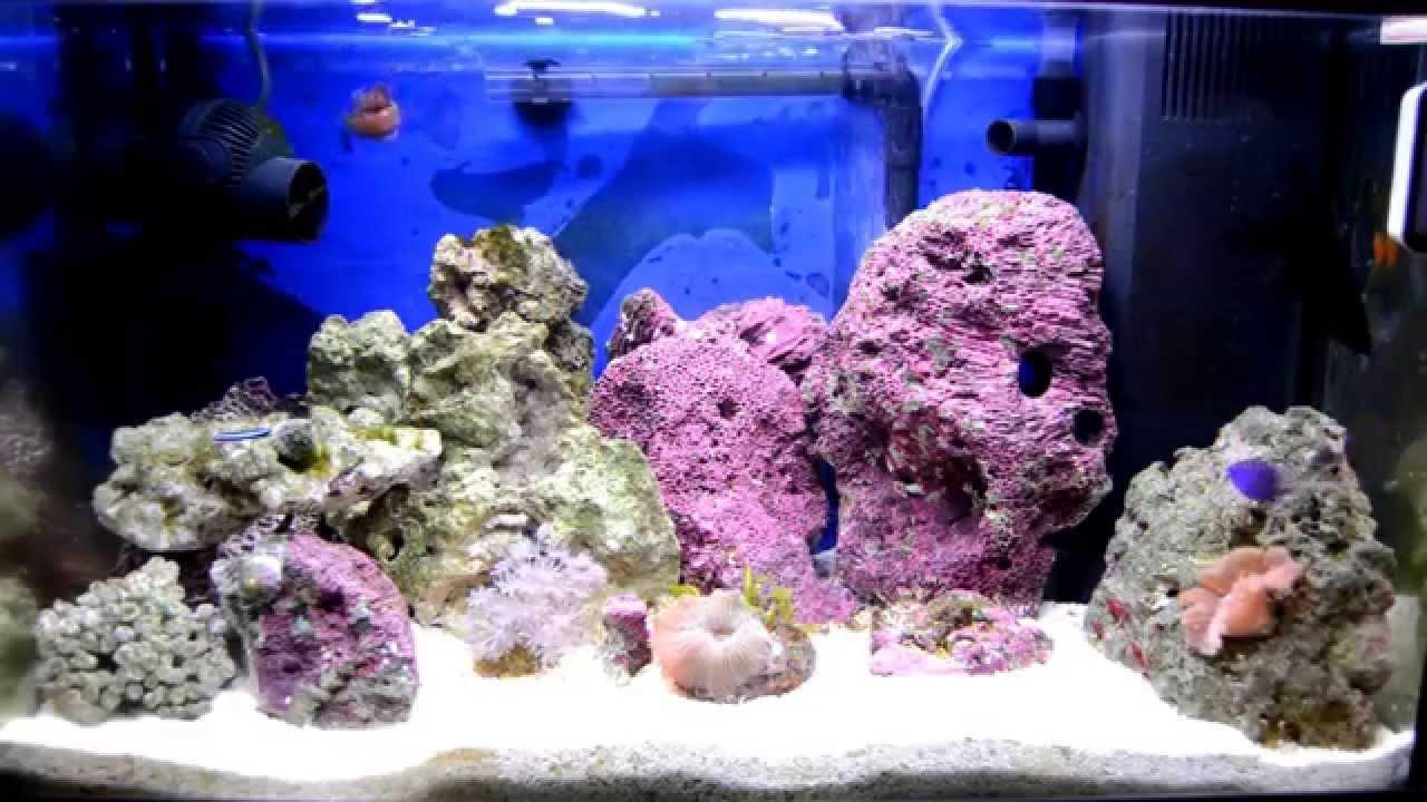 Acuario marino 60 litros youtube for Peces de acuario marino