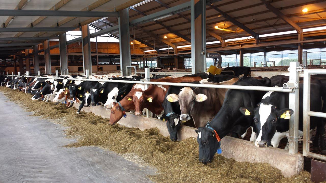 Milchviehbetrieb Endres In Bad Grönenbach