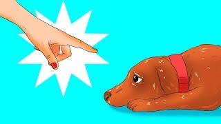 Köpeğinize Farkında Olmadan Yaptığınız 12  Zararlı Şey