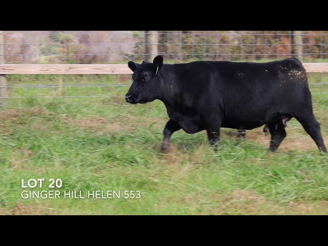 Ginger Hill Angus Lot 20