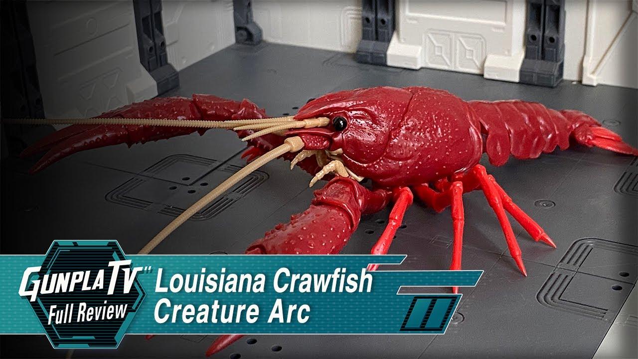 Red Louisiana Crawfish Fujimi 170831 Biology Research 24 Procambarus Clarkii