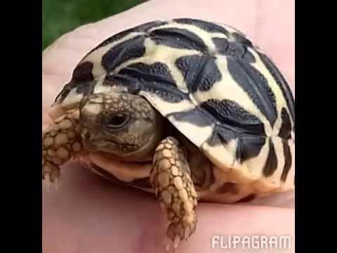 The Turtles of Turtle Club!
