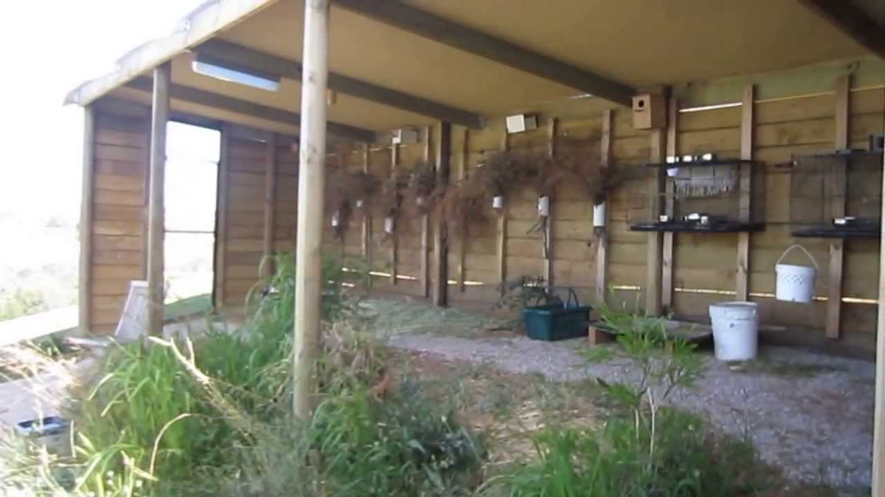 Planted finch aviary  YouTube