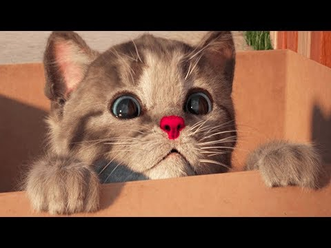 Little Kitten My Favorite Cat - Play Fun Kitten Pet Care Animation Games For Children By Fox & Sheep