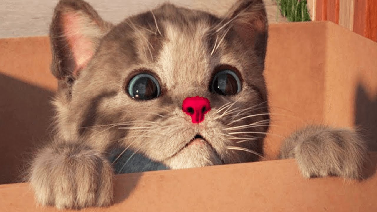 Little Kitten My Favorite Cat - Play Fun Kitten Pet Care Animation Games For Children By Fox & S
