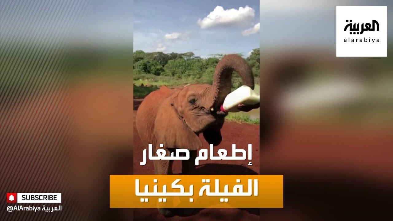 صباح العربية | أخبار بلا سياسة: فيلة رضيعة يتيمة تتسابق من أجل إطعامها في كينيا  - نشر قبل 37 دقيقة