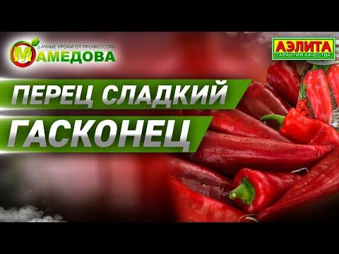 ПЕРЕЦ СЛАДКИЙ ГАСКОНЕЦ  на сезон 2020 года