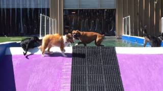 North Charleston, Sc, Pooch Palace Dog Daycare  #madewithreplay @replay_app