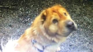 смешные видео про кошек и собак до слез - Смешное видео про котов и собак 2017