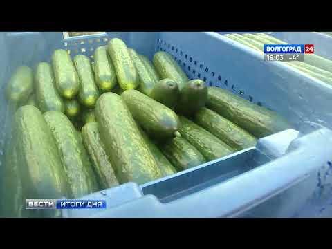 В Волгоградской области расширяется производство тепличных овощей