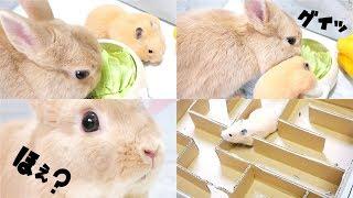 ASMR#animal#rabbit Hi guys :) Thank you so much for visiting my cha...