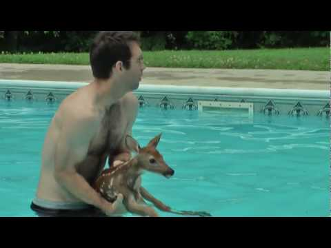 Baby Deer Trapped In Pool Youtube