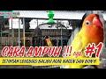 Cara Ampuh Mengurangi Kepo Pada Lovebird Balibu Atau Paud Setingan Paud Gacor Di Gantangan Part   Mp3 - Mp4 Download