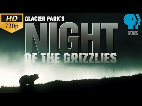 Glacier Park's: Night of the Grizzlies | PBS Documentary ⁷²⁰ᵖ