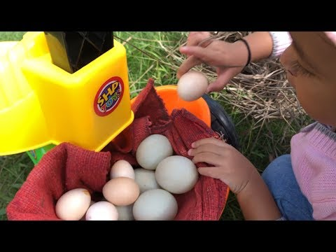 Balita Lucu Berburu Telur Bebek Dan Ayam Kate Di Belakang Rumah - Sepeda Roda Tiga