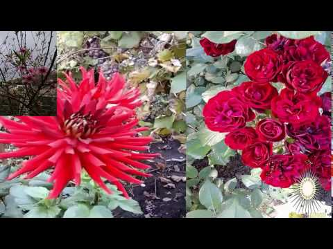 микс цветы