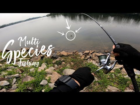 Multi Species Fishing: Singapore Legal Fishing Ground