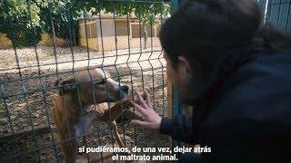Acabar con el maltrato animal nos engrandece como sociedad