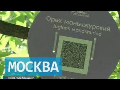 Сокольники (район Москвы) — Википедия