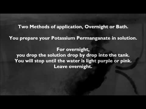 Using Potassium Permanganate for Aquarium Tropical Discus Fish