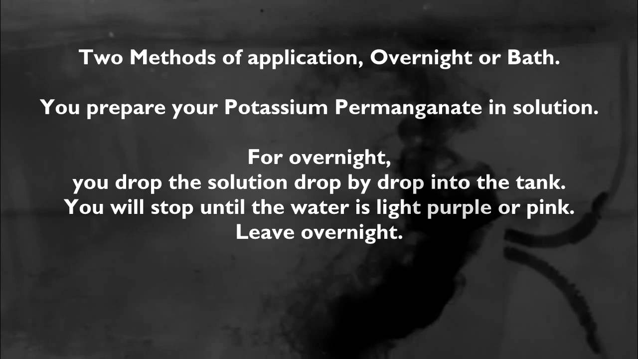 Using potassium permanganate for aquarium tropical discus for Potassium in fish