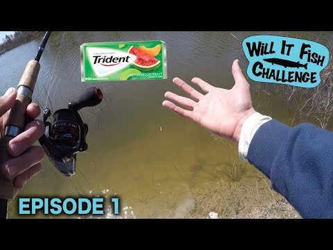 Can I Catch Fish On Chewing Gum?!